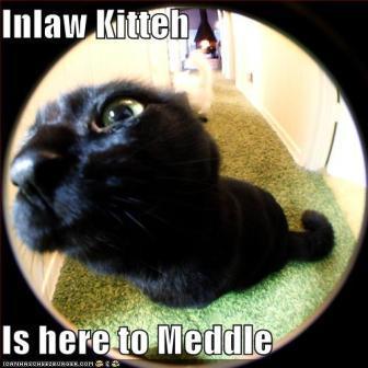 in-law-kitteh.jpg