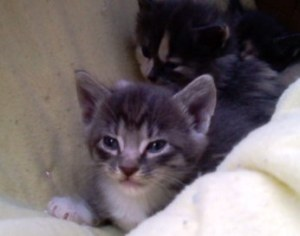 Disgruntled Kitty